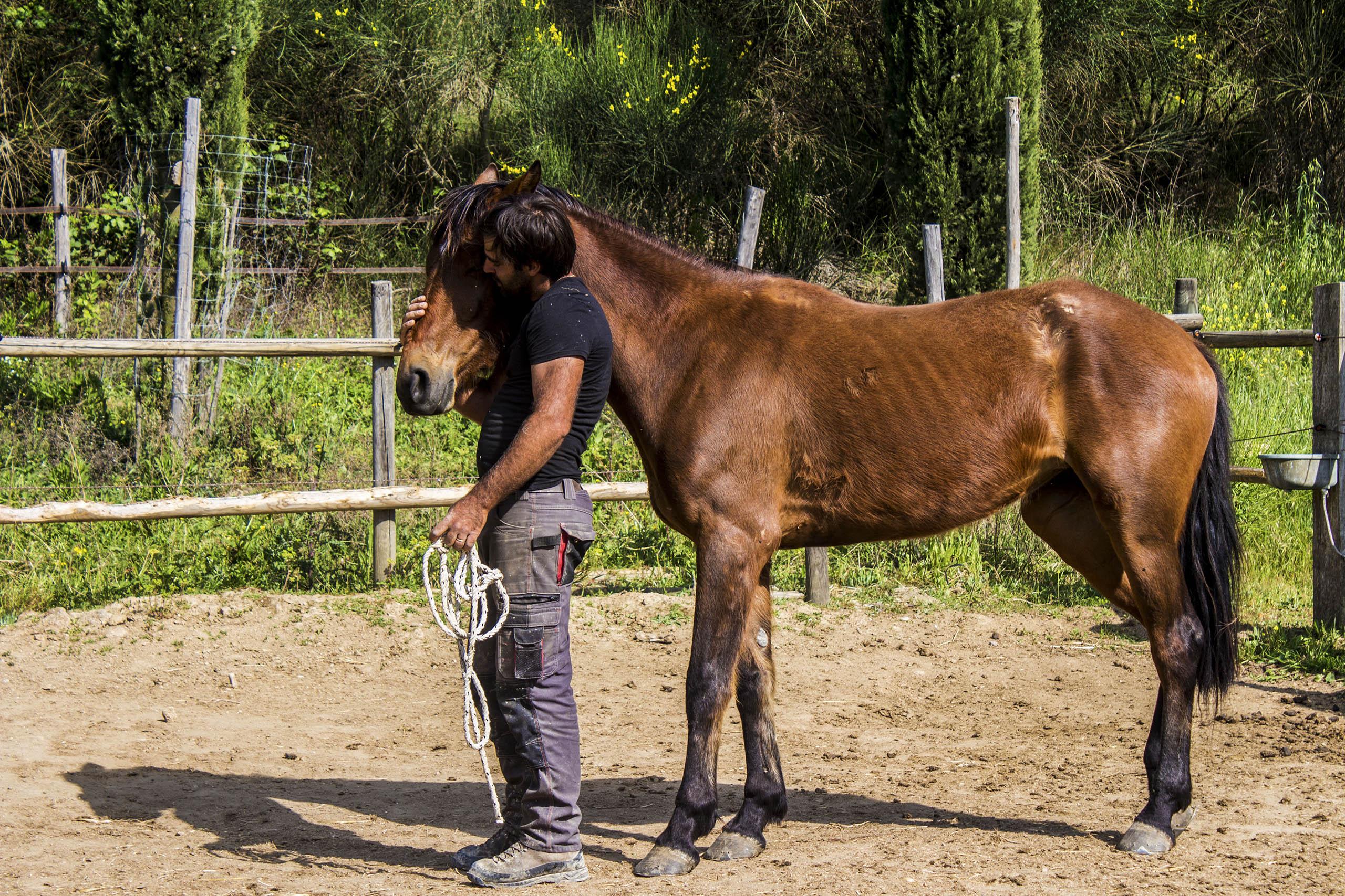 Escursioni a cavallo - Agriturismo Poggio del Bolognino