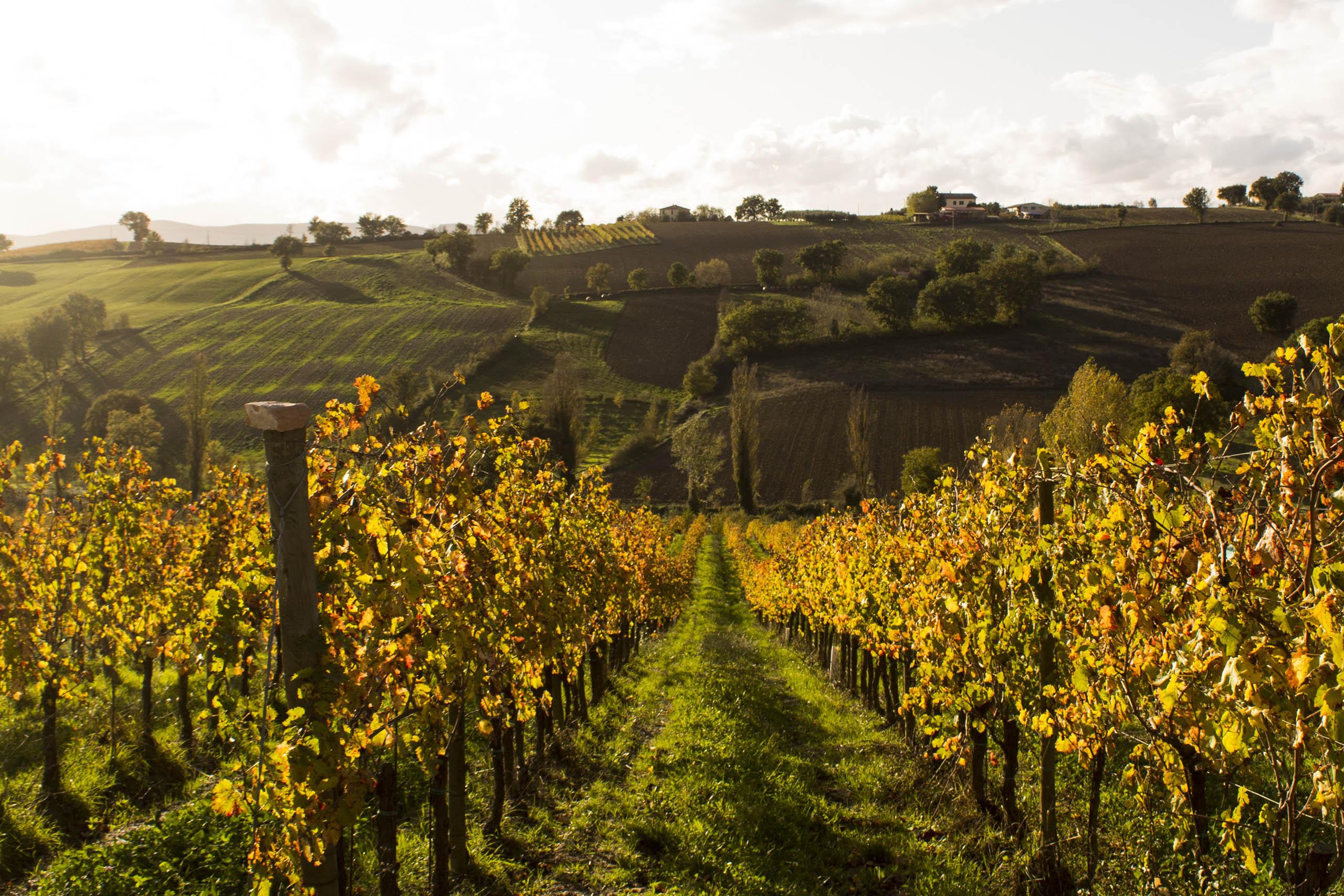 Erfahrung mit Wein - Bauernhaus Poggio del Bolognino